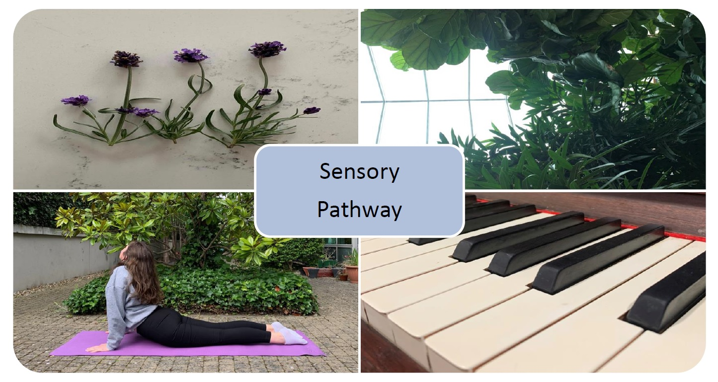 Image of plants, yoga and piano with 'sensory pathway' as caption